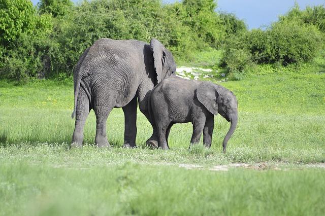 séjour_Botswana_élephant