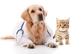 assurer-animal-compagnie
